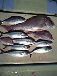9月20日(水)釣果