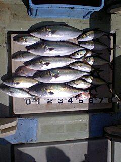 午前の釣果