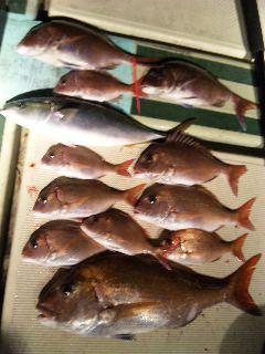 午後便の釣果は、鯛11本60㌢〜20㌢ハマチ1本50㌢でした。