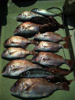 午前便 釣果は、鯛45㌢〜25㌢が9本でした。明日 午前便 空席あります。