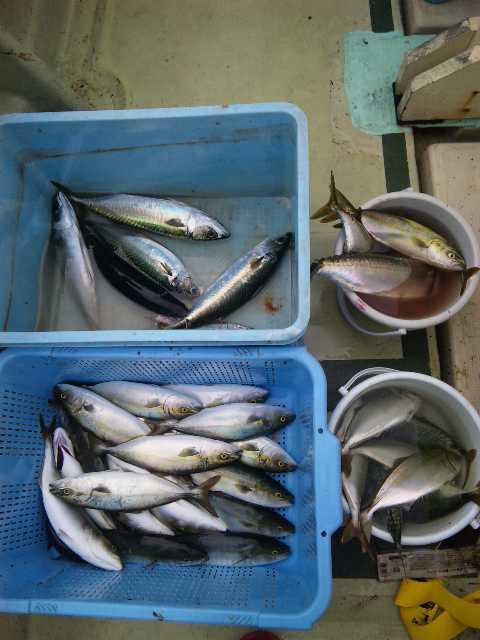 釣果は、ツバス30本・サバ9本・タイ1本でした。6人の釣果です。