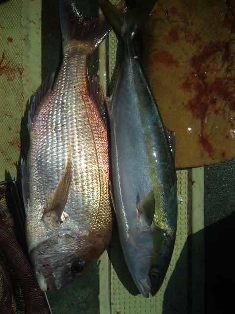釣果は、メジロ62㌢タイ52㌢サワラ2本タチウオ100本以上でした。