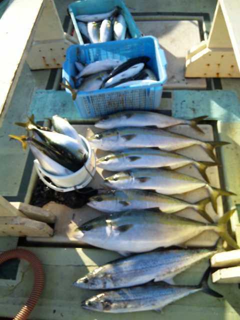 今日は、10人の釣果です。ブリ2本メジロ4本サワラ2本ハマチ38本でした。