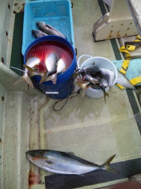 釣果は、メジロ1本ハマチ20本でした。