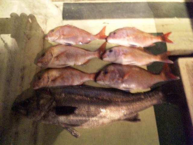 6人の釣果です。鯛6本シーバス1本でした。