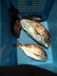 釣果は、鯛2本でした。