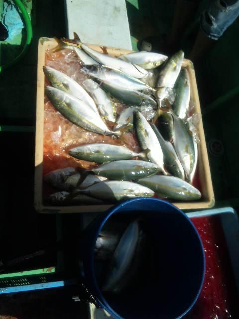 今日の釣果は、ツバス・ハマチ60本以上シオ8本サバ3本アジ10本でした。  明日も、出船します。予約は、090−4282−4828までお願いします。