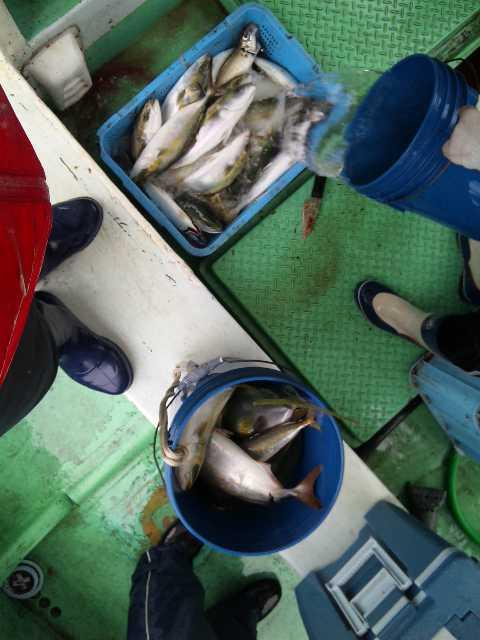 釣果は、メジロ1本ハマチ・ツバス25本アジ20本サゴシ1本でした。