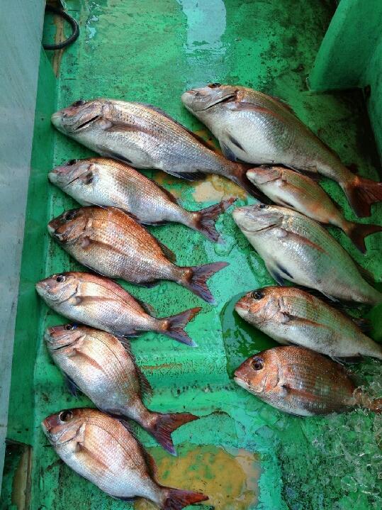 釣果は、鯛11枚ガシラでした。     15日水曜日  午前便出船します。まだ空席有ります。