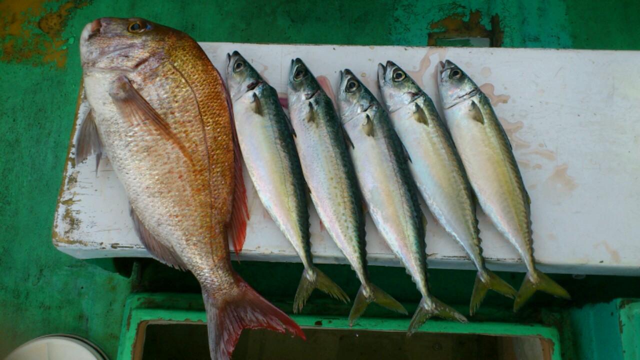 日曜日の釣果です。午前、午後