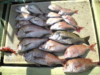 午前便 釣果は、鯛53㌢2本47㌢2本45㌢1本40㌢1本25㌢〜35㌢11本でした。