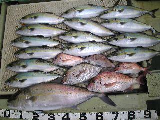 午前便 釣果は、カンパチ73㌢ハマチ14本鯛45㌢2本25㌢3本でした。明日 空席あります。