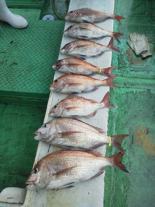 釣果は、タイ8本てした。