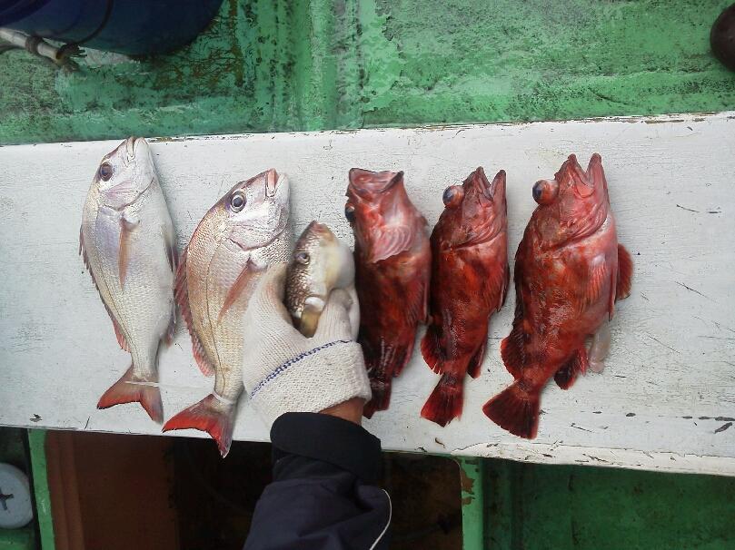 今日は、10時に早帰り。釣果は、タイ2本てした。