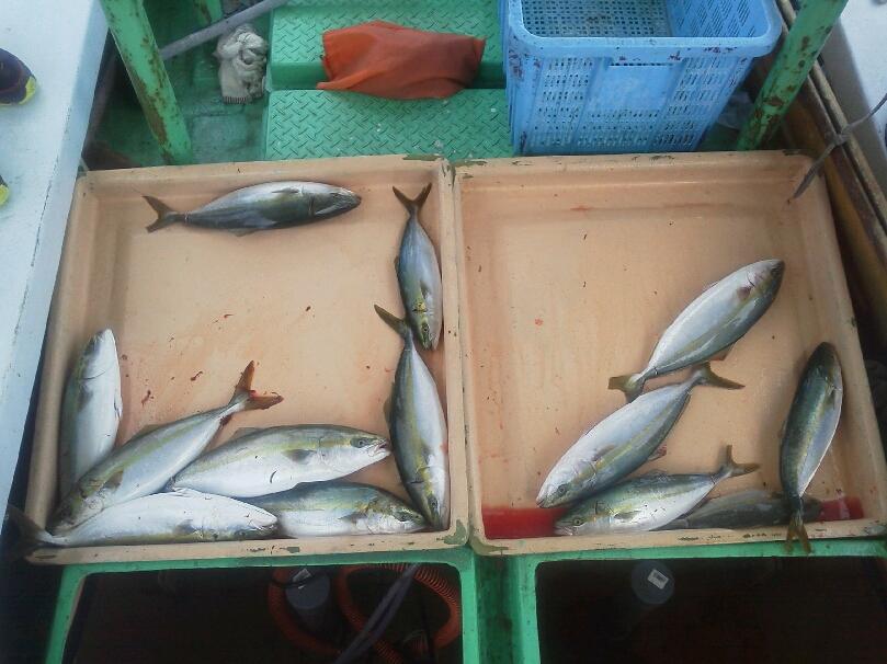 釣果は、ツバス・ハマチ15本シオ1本サワラ1本タチウオ200ぐらいでした。明日キャンセルが出ました。