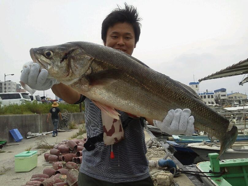 釣果は、メジロ1本ハマチ13本シオ7本サワラ2本サゴシ6本スズキ2本タチウオ200本以上でした。