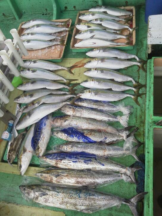 釣果は、メジロ23本サワラ8本アイブリでした。