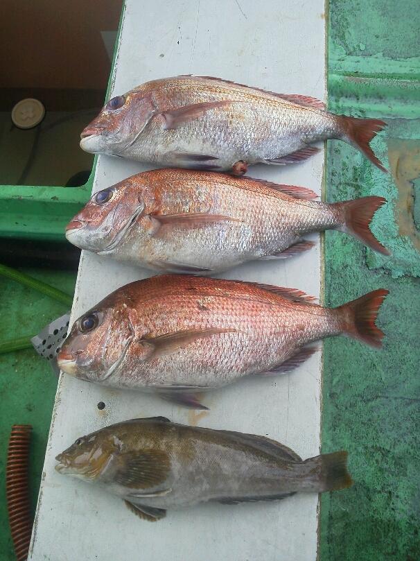 釣果は、鯛3枚アブラメ1本ガシラでした。明日  まだ空席有ります。