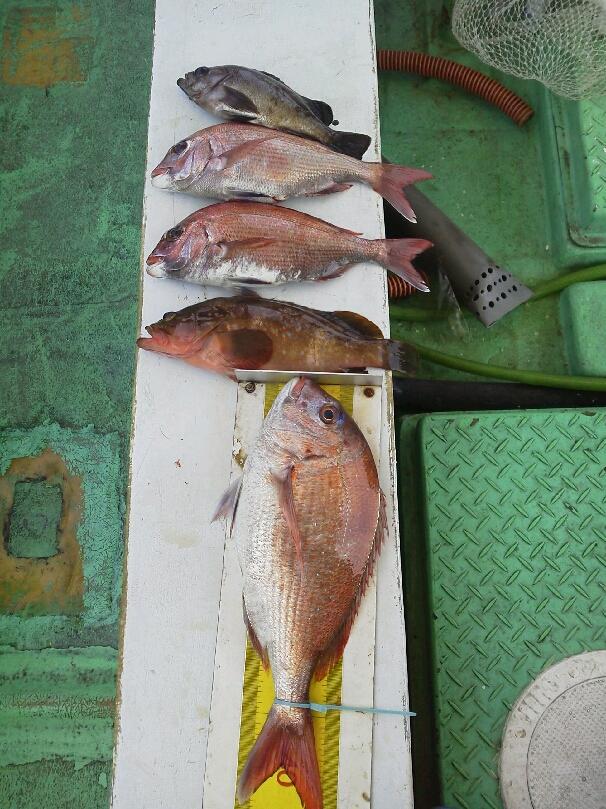 6日の、釣果は、鯛3枚アコウでした。