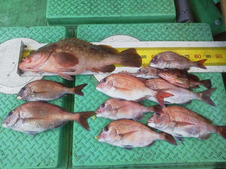 釣果は、鯛8枚アコウ54センチ、ガシラ、イシモチでした